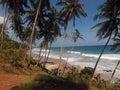 Blue sky, palm trees, sand, waves, sea