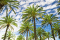 Blue sky palm trees in tropical summer Royalty Free Stock Photo