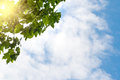 Blue sky, puffy clouds and fresh green tree Royalty Free Stock Photo
