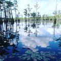 Blue sky reflection in the water swamp south Carolina cypress trees Royalty Free Stock Photo