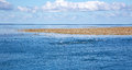 Blue sky sea clouds and coral reef with seagulls exposed at low tide feeding on bait fish Stock Image