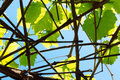 Blue sky seen through green leaves and branches Royalty Free Stock Images