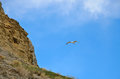 Blue sky, the slope mountains, and flying bird Seagull Royalty Free Stock Photo