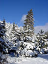 Blue sky and snow woods Royalty Free Stock Photo