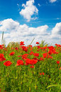 Blue sky with thunderclouds and  field of poppies. Royalty Free Stock Photo