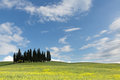 Blue sky of tuscany over the famous group cypress trees in near pienza Royalty Free Stock Photos