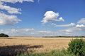 Blue sky with white clouds and field a plowed Royalty Free Stock Image
