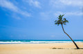 Blue sky, white sand beach, sea and a coconut palm tree Royalty Free Stock Photo
