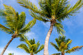 Blue sky with white sand and palm beach in Key West Royalty Free Stock Photo