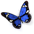 Blue solar butterfly Stock Photos