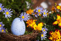 Blue speckled egg in nest a twig surrounded by daisies and yellow marigold flowers Royalty Free Stock Image