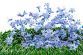 Blue spring flowers decoration Royalty Free Stock Images