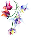 Blue spring flowers watercolor illustration Royalty Free Stock Photography