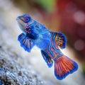 Blue Star Fish Royalty Free Stock Photo