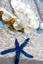 Blue starfish and pearl shell in the clear water. Royalty Free Stock Photo