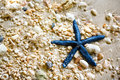 Blue starfish Royalty Free Stock Photo