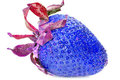 Blue strawberry Stock Photo