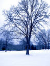 Blue Tone Winter Tree Stock Photography