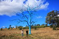 Surrealistic naked blue tree in park with surprised women