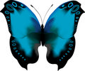Blue tropical butterfly with open wings Royalty Free Stock Photos