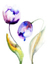 Blue tulips flowers watercolor illustration Royalty Free Stock Image