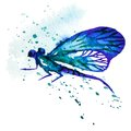 Blue watercolor dragonfly vector greeting background with beautiful flying Royalty Free Stock Image