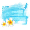 Blue watercolor stain background summer fresh illustration with asian frangipani flower Stock Photography