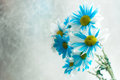 Blue and white aster flowers in a glass vase. Royalty Free Stock Photo