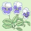 Blue white pansy vector illustration Royalty Free Stock Images