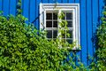 Blue window covered with green plants Royalty Free Stock Photo