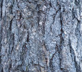 Blue woden backgrond Royalty Free Stock Photo