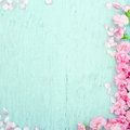 Blue wooden background with pink flowers spring blossom and copy space Royalty Free Stock Photo
