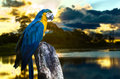 Blue And Yellow Macaw On The N...