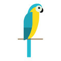 Blue and yellow macaw parrot brazil