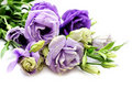 Bluebell bouquet Stock Image