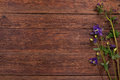 Bluebells flowers on wooden table. Top view, copy space. Royalty Free Stock Photo