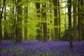 Bluebells Woods