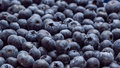 Blueberries background banner Stock Photography