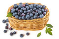 Blueberries in a basket Royalty Free Stock Photo