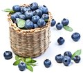 Blueberries in a basket Royalty Free Stock Photography