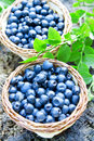 Blueberries baskets with fresh from the forest fresh ripe berries and dessert ingredient Stock Photo