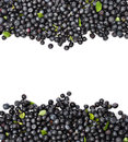 Blueberries Border Royalty Free Stock Image