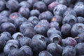 Blueberries closeup picture of fresh Stock Image
