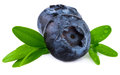 Blueberries closeup. Two blueberries  on white Royalty Free Stock Photo