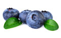 Blueberries closeup Royalty Free Stock Photo