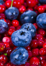 Blueberries and cranberries Royalty Free Stock Photography