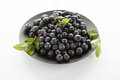 Blueberries hill ripe on a black plate on a white background Royalty Free Stock Photography
