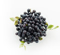 Blueberries hill ripe on a glass plate on a white background Stock Image