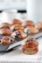 Blueberries muffins Stock Image