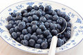 Blueberries in a pretty dish freshly washed blue and white Royalty Free Stock Image